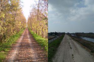 Comunicato Stampa- argini del Brenta a Vigonovo, vegetazione rasa al suolo!